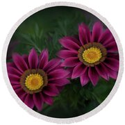 Round Beach Towel featuring the photograph Magenta African Daisies by David and Carol Kelly