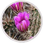 Magenta Cactus Flowers Round Beach Towel