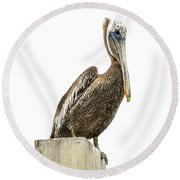 Majestic Gulf Shores Pelican 1071a Round Beach Towel