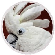 Maggie The Umbrella Cockatoo Round Beach Towel