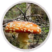 Round Beach Towel featuring the photograph Magic Mushrooms by Natalie Ortiz
