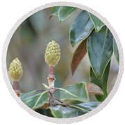 Round Beach Towel featuring the photograph Magnolia Buds by Maria Urso