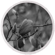 Magnolia Bw Blooms Buds Branches Round Beach Towel