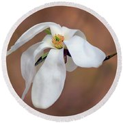 Round Beach Towel featuring the photograph Magnolia Grace by Nikolyn McDonald