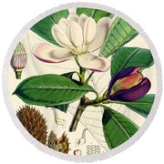 Magnolia Hodgsonii Round Beach Towel