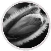 Round Beach Towel featuring the photograph Magnolia Stellata Bud by Keith Elliott