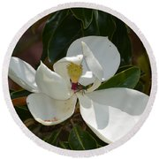 Magnolia With Beetle Round Beach Towel by Maria Urso