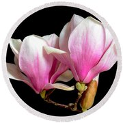 Magnolias In Spring Bloom Round Beach Towel