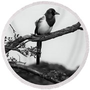 Magpie  Round Beach Towel by Philip Openshaw