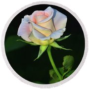 Round Beach Towel featuring the photograph Maid Of Honour Rose 001 by George Bostian