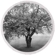 Maine Apple Tree In Fog Round Beach Towel