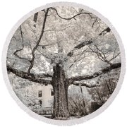 Round Beach Towel featuring the photograph Maine Neighborhood Tree by Craig J Satterlee