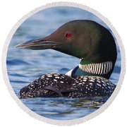 Majestic Common Loon Round Beach Towel