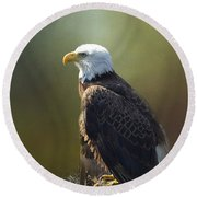 Majestic Eagle In The Filtered Light Of The Forest Round Beach Towel