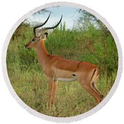 Round Beach Towel featuring the photograph Majestic Impala by Gary Hall