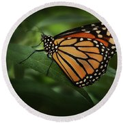 Majestic Monarch Round Beach Towel by Marie Leslie