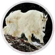 Majestic Mountain Goat Round Beach Towel