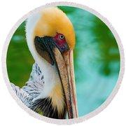 Majestic Pelican 48 Round Beach Towel