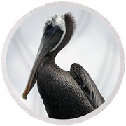 Round Beach Towel featuring the photograph Majestic Pelican Photography A10317l by Mas Art Studio