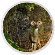 Majestic Whitetail Round Beach Towel
