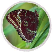 Round Beach Towel featuring the photograph Majesty Of Nature by Karen Wiles