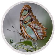 Malachite Butterfly Profile Round Beach Towel