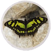 Round Beach Towel featuring the photograph Malachite Butterfly - Siproeta Stelenes by Paul Gulliver