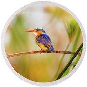 Malachite Kingfisher Hunting Round Beach Towel