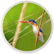 Malalchite Kingfisher Round Beach Towel