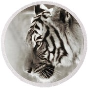 Malayan Tiger Round Beach Towel