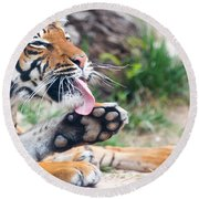 Malayan Tiger Grooming Round Beach Towel