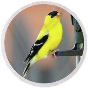 Male American Goldfinch Round Beach Towel
