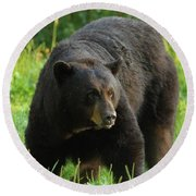 Round Beach Towel featuring the photograph Male Black Bear In Late Light by Coby Cooper