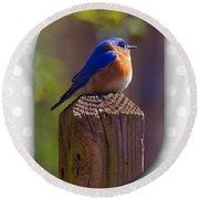 Male Bluebird Round Beach Towel