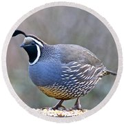 Male California Quail Round Beach Towel