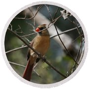 Cardinal Round Beach Towel by Cathy Harper