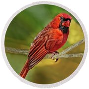 Male Cardinal Headshot  Round Beach Towel