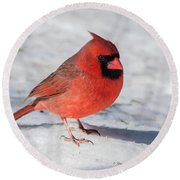 Male Cardinal In Winter Round Beach Towel