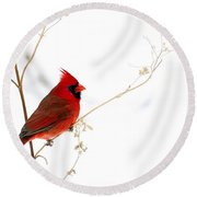 Male Cardinal Posing In The Snow Round Beach Towel