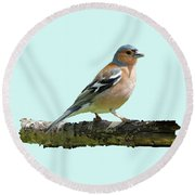 Male Chaffinch, Blue Background Round Beach Towel by Paul Gulliver