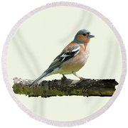 Male Chaffinch, Cream Background Round Beach Towel by Paul Gulliver