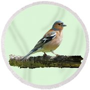 Male Chaffinch, Green Background Round Beach Towel by Paul Gulliver