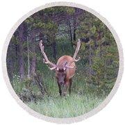 Bull Elk Rmnp Co Round Beach Towel