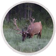 Bull Elk Rocky Mountain Np Co Round Beach Towel