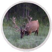 Bull Elk Rocky Mountain Np Co Round Beach Towel