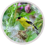 Male Goldfinch Round Beach Towel by Kathy Eickenberg