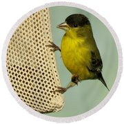 Male Goldfinch On Sock Feeder Round Beach Towel