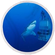 Male Great White With Cage, Guadalupe Round Beach Towel by Todd Winner