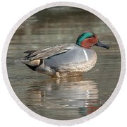 Male Green-winged Teal Dwf0171 Round Beach Towel