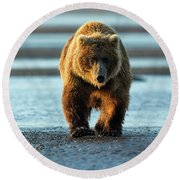 Male Grizzly At Low Tide Round Beach Towel